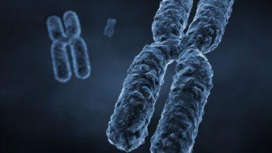 10 faits sur les chromosomes