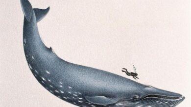 11 Faits sur les baleines bleues, les plus gros animaux jamais rencontrés sur Terre
