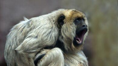 11 des animaux les plus bruyants de la Terre