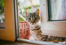 15 noms les plus uniques pour les chats femelles