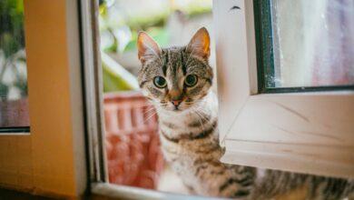 Photo de 15 noms les plus uniques pour les chats femelles