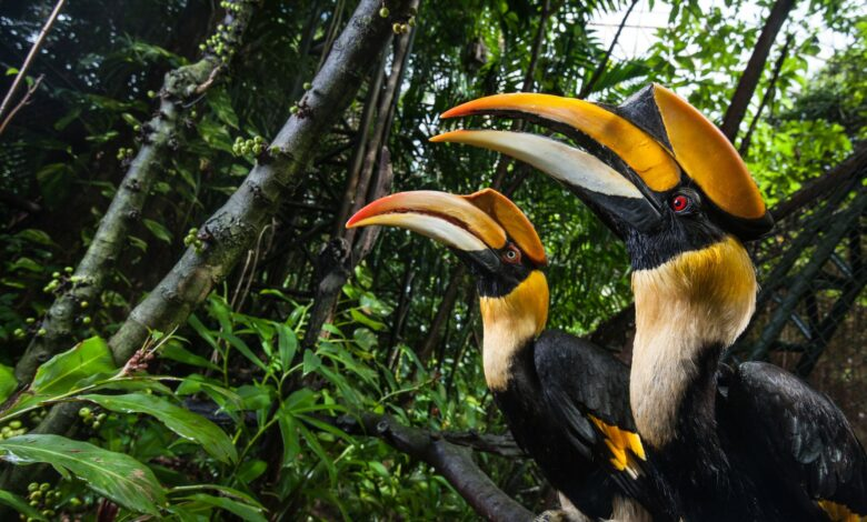 15 oiseaux au bec incroyable