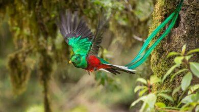 15 oiseaux avec des plumes de queue spectaculairement fantaisistes
