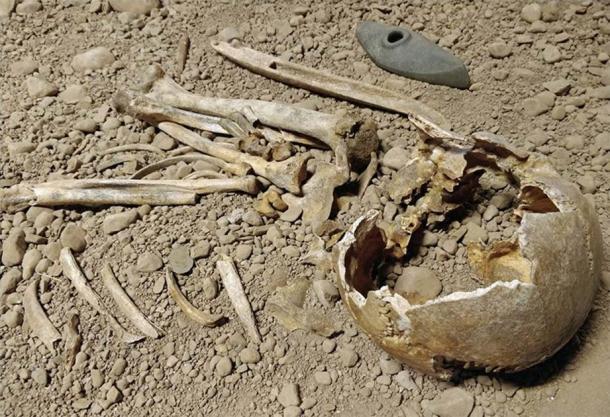 Les preuves archéologiques et les données ADN des vestiges exposés au musée d'Östergötlands ont été cruciales dans l'étude de la Royal Society qui visait à identifier les origines de la culture des haches de combat. (Musée d'Östergötlands)