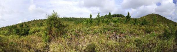 Jeunes pins de l'île des Pins (Nouvelle-Calédonie). (bennytrapp /Adobe Stock)