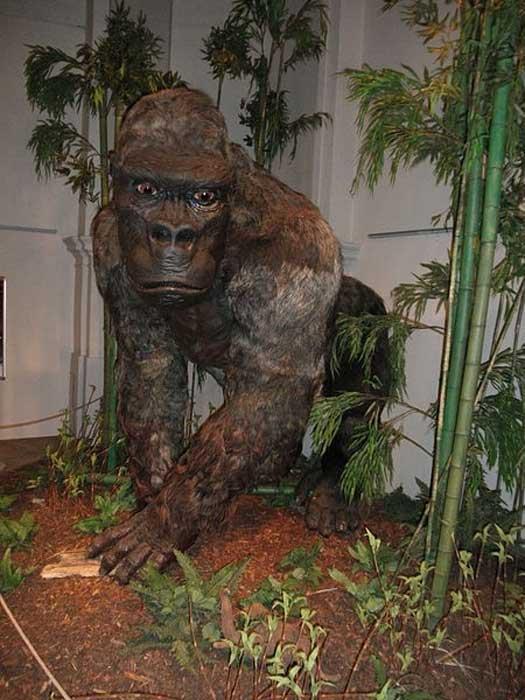 Restauration du Gigantopithecus blacki tel qu'il figurait à