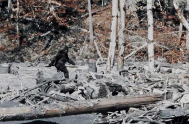 Bigfoot dans le film de Patterson-Gimlin.