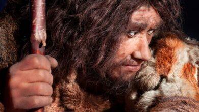 Neanderthal. Source: procy_ab / Adobe Stock