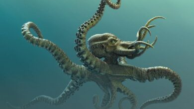 The Legendary Kraken