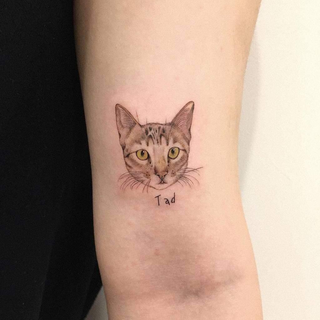 Tatouages réalistes de petits chats jins_tattoo