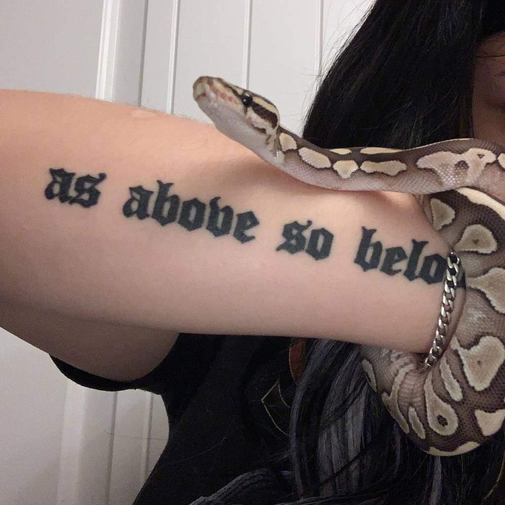 Le lettrage comme ci-dessus, donc sous les tatouages Salem.theballpython