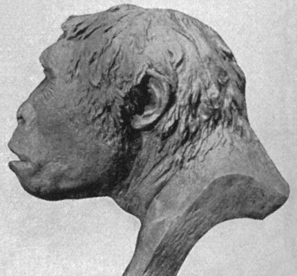 Une reconstruction du crâne de Java Man datant de 1922, basée sur la découverte de Trinil 2. (Domaine public)