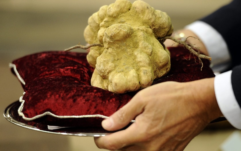 Les aliments les plus chers - les truffes blanches
