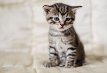 18 signes que votre chat est malade