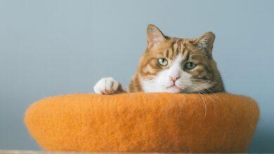 19 Noms de chats orange