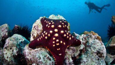 19 espèces d'étoiles de mer bizarres et magnifiques