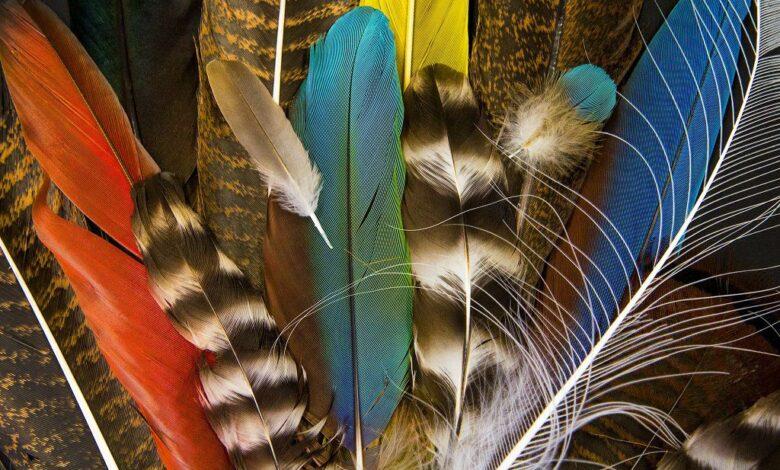 20 faits étonnants sur les plumes