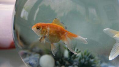 248 noms que vous pouvez donner à votre poisson d'agrément