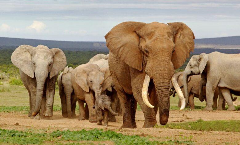6 façons d'aider les éléphants