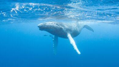 7 Chansons d'obsession chantées par les baleines