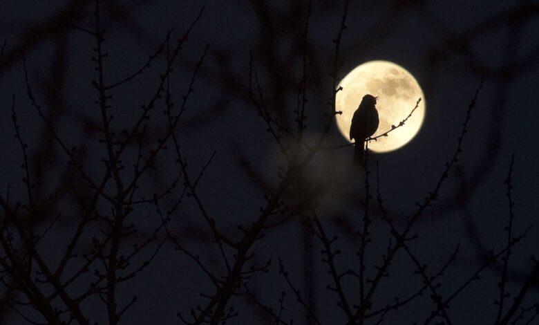 9 Chants d'oiseaux de nuit d'une beauté sinistre