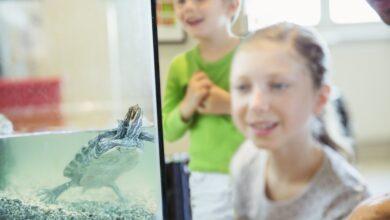 À propos des tortues écloses sans salmonelle