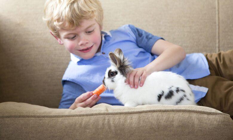 Achat et soins d'un lapin de compagnie