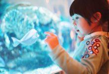 Acheter un aquarium pour un enfant ou un adolescent