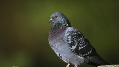 Anatomie interne et externe des oiseaux