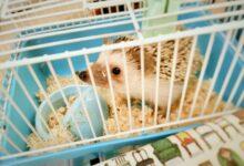 Cages et autres logements pour les hérissons