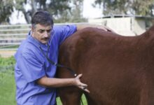 Carrières et emplois dans le secteur du cheval