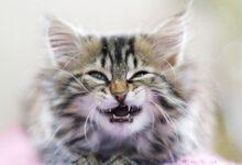 Ce que vous devez savoir sur les dents de chaton et les soins dentaires