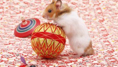 Choisir des jouets pour votre hamster de compagnie