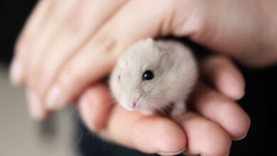 Choisir une cage à hamster naine