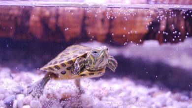 Combien de temps vivent les tortues ?