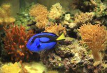 Comment contrôler les algues dans un aquarium d'eau de mer