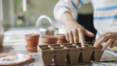 Comment démarrer les semences à l'intérieur