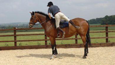 Comment descendre ou descendre d'un cheval