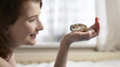 Comment entraîner votre hamster à être apprivoisé