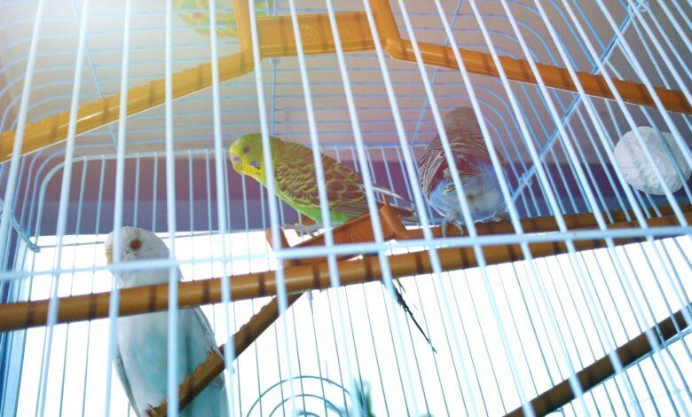 Comment entraîner votre oiseau au pot