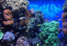 Comment entretenir un aquarium d'eau salée