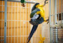 Comment et pourquoi convertir votre oiseau qui mange des graines en granulés