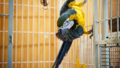 Photo de Comment et pourquoi convertir votre oiseau qui mange des graines en granulés