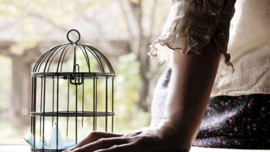 Comment faire face à la perte d'un oiseau de compagnie