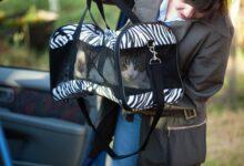 Comment faire un voyage en voiture avec votre chat