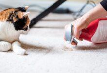 Comment garder votre maison propre avec les animaux de compagnie