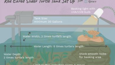 Comment installer un réservoir pour votre tortue à oreilles rouges