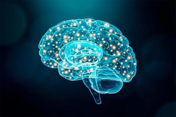 Représentation du cerveau humain éclairé montrant l'activité neuronale. (Matthieu / Adobe stock)