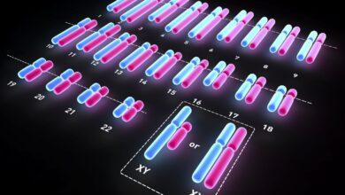 Comment les chromosomes déterminent le sexe