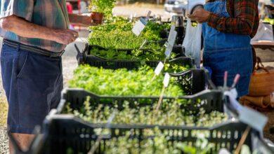 Comment naviguer sur les marchés agricoles locaux